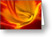 Lily Greeting Cards - Red Light Greeting Card by Juergen Roth