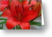 Diane Berry Digital Art Greeting Cards - Red Lily Greeting Card by Diane E Berry