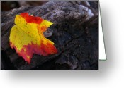 Red Maple Greeting Cards - Red Maple Leaf on Old Log Greeting Card by Anna Lisa Yoder