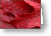 Red Maple Greeting Cards - Red Maple Leaves Greeting Card by Jennie Marie Schell