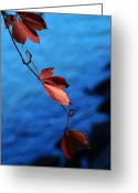 Red Maple Greeting Cards - Red maple leaves Greeting Card by Mingqi Ge