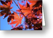 Japanese Maple Greeting Cards - Red Maple Greeting Card by Rona Black