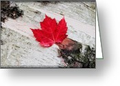 Autumn Scenes Greeting Cards - Red Maple - Semi Abstract   Greeting Card by Thomas Schoeller