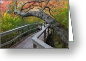 Red Maple Greeting Cards - Red Maple Swamp Cape Cod National Seashore Greeting Card by John Burk