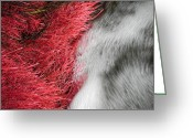 Adrienne Petterson Greeting Cards - Red Moss and Water Greeting Card by Adrienne Petterson