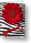 Stripes Greeting Cards - Red Mum and Red Key Greeting Card by Garry Gay