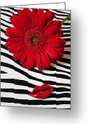 Chrysanthemum Greeting Cards - Red Mum And Red Lips Greeting Card by Garry Gay