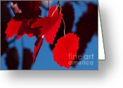 Red Leaves Greeting Cards - Red on Blue Greeting Card by Sharon  Talson