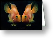 Two Animals Greeting Cards - Red Parrot Fish Greeting Card by MariClick Photography