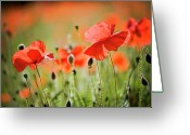 Cornwall Greeting Cards - Red Poppies Field Greeting Card by Jacky Parker Photography