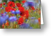 Wagner Photo Greeting Cards - Red Poppies in the Maedow Greeting Card by Heiko Koehrer-Wagner