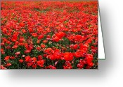 Espana Greeting Cards - Red Poppies Greeting Card by Juergen Weiss