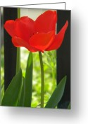 Creative Passages Photo Greeting Cards - Red Poppy Greeting Card by Cassandra Donnelly