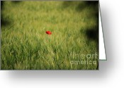 Remembrance Greeting Cards - Red Poppy in a field Greeting Card by Pixel Chimp