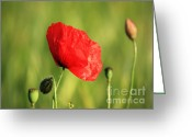Sunday Greeting Cards - Red Poppy in field Greeting Card by Pixel Chimp