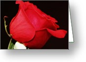 Flower Photograph Greeting Cards - Red Red Rose Greeting Card by Cathie Tyler