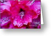 Gardeners Greeting Cards - Red Rhododendron Greeting Card by Frank Tschakert