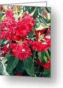 Beautiful Flowering Trees Greeting Cards - Red Rhododendrons of Dundarave Greeting Card by David Lloyd Glover