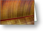 Red Lines Greeting Cards - Red Ribbed Leaf Greeting Card by Rich Franco