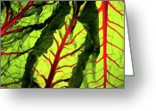 Lettuce Green Greeting Cards - Red River Greeting Card by Bobby Villapando