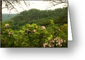 Mountain Laurel Greeting Cards - Red River Gorge Greeting Card by Amanda Kiplinger