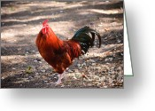 Alarm Greeting Cards - Red Rooster Greeting Card by Charles Dobbs