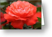 Chevalier Greeting Cards - Red Rose 1 Greeting Card by Elizabeth Chevalier