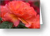 Chevalier Greeting Cards - Red Rose 13 Greeting Card by Elizabeth Chevalier