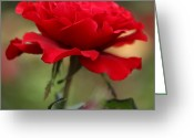 Chevalier Greeting Cards - Red Rose 8 Greeting Card by Elizabeth Chevalier