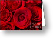 Bouquet Of Roses Greeting Cards - Red Rose Bouquet Dream Greeting Card by James Bo Insogna
