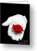Holding Flower Greeting Cards - Red rose held in a white glove Greeting Card by Richard Thomas