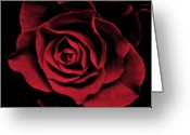  Flowers Photographs Greeting Cards - Red Rose II Greeting Card by Artecco Fine Art Photography - Photograph by Nadja Drieling