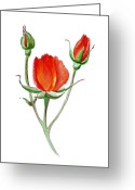 Watercolor By Irina Greeting Cards - Red Rose Greeting Card by Irina Sztukowski