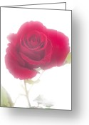 Fine Art Framed Prints Greeting Cards - Red Rose Isolated on White Fog Greeting Card by M K  Miller