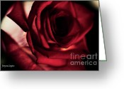 Reds Greeting Cards - Red Rose Greeting Card by Jayne Logan