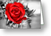 Oklahoma Landscape Greeting Cards - Red Rose Greeting Card by Karen M Scovill