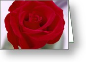 Red Rose Greeting Cards - Red Rose Greeting Card by Mike McGlothlen