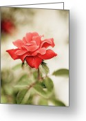 Georgia Greeting Cards - Red Rose Greeting Card by Natalia Ganelin