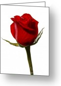 Single Rose Greeting Cards - Red Rose Greeting Card by Scott Pellegrin