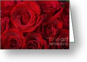 Bouquet Of Roses Greeting Cards - Red Roses and Water Drops Greeting Card by James Bo Insogna
