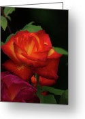 Roze Greeting Cards - Red Roze Greeting Card by Jeff Wilson