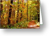 Indiana Autumn Greeting Cards - Red Run Trail Greeting Card by Ed Smith