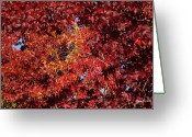 Red Leaves Greeting Cards - Red Sea Greeting Card by Donna Blackhall