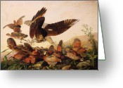 Fighting Painting Greeting Cards - Red Shouldered Hawk Attacking Bobwhite Partridge Greeting Card by John James Audubon