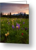 Lupine Greeting Cards - Red Sky Meadow Greeting Card by Mike  Dawson