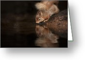 Shine Greeting Cards - Red Squirrel Reflection Greeting Card by Andy Astbury