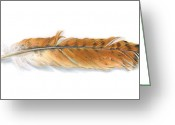 Natural Drawings Greeting Cards - Red-tailed Hawk feather Greeting Card by Logan Parsons