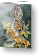 Red Leaves Painting Greeting Cards - Red-Tailed Hawk Lookout Greeting Card by Patricia Pushaw