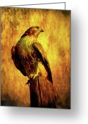 Wings Domain Greeting Cards - Red Tailed Hawk . texture . 40D10167 Greeting Card by Wingsdomain Art and Photography