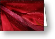 ; Maui Greeting Cards - Red Ti the Queen of Tropical Foliage Greeting Card by Sharon Mau